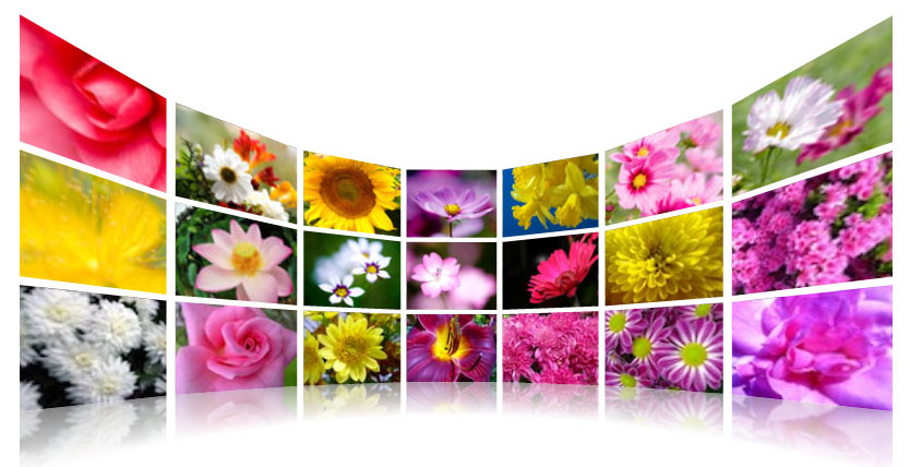 3d wall photo gallery where this plugin is provides display animated images that you can zoom to further clarify the picture we want to